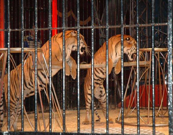 Cirques : ni cage, ni fouet, ni piste
