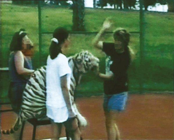 Violentés et dénaturés… La vérité sur le dressage des animaux dans les cirques