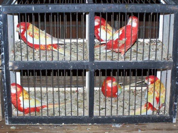 oiseaux de bourse