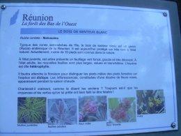 RANDO SANTE DU 29 JANVIER 2012 : CONSERVATOIRE BOTANIQUE DES MASCARINS