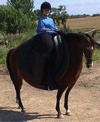 le plus gros cheval du monde blog de leschevaux457. Black Bedroom Furniture Sets. Home Design Ideas