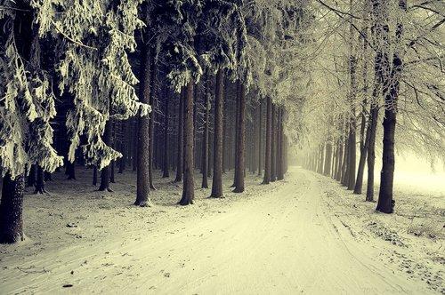 Absente tout l'hiver. Motif: hibernation.