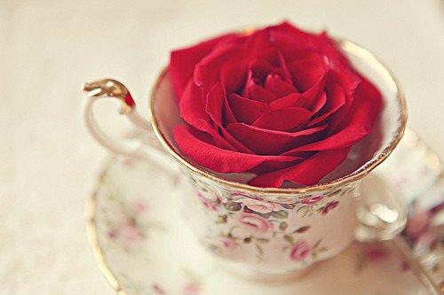 Quand c'est finit, abandonner. Rien ne sert d'arroser une fleur morte.