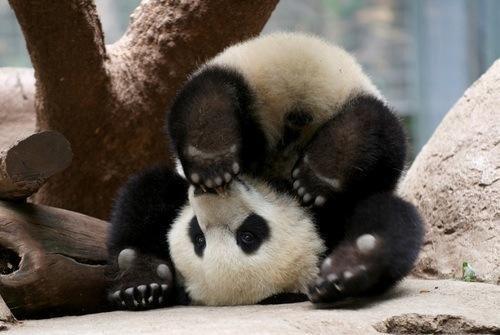 Les lycéens qui manifestent alors qu'ils bossent pas, ridicule. Comme ces gens qui manifestent pour le WWF et qui sont même pas des pandas.
