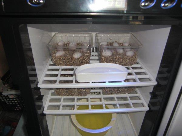 nouvel incubateur