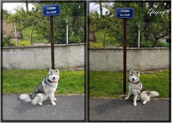 Deejay au Chemin du Loup ^^