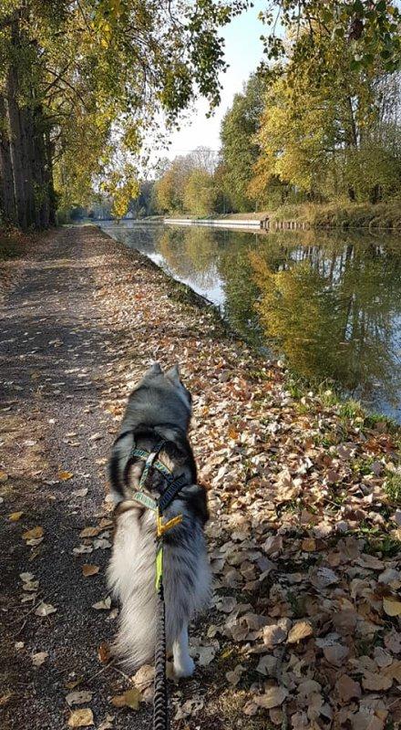 5km de marche a ajouter à sa liste de chasse une taupe et une musaraine lol