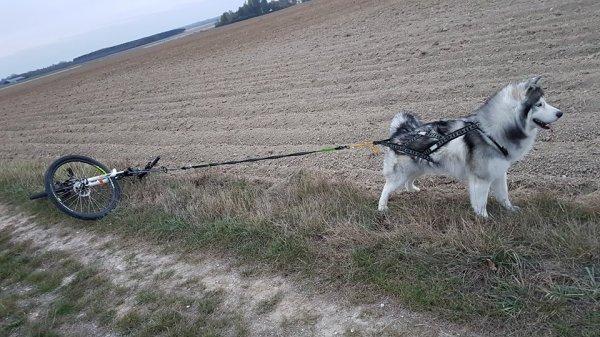 enfin notre 1ère essai Cani-Vtt