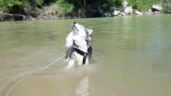 2 juin 2019 journée à la rivière
