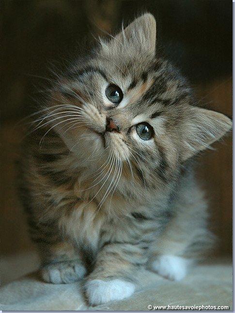 Le petit chat triste comptine