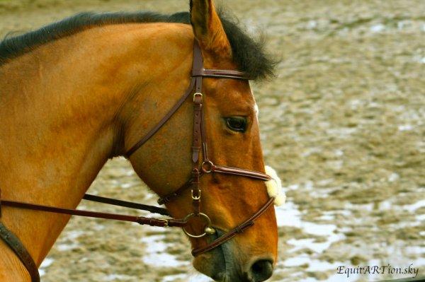 Un cheval peut prêter à son cavalier la vitesse et la force dont il manque ; mais le cavalier doué de bon sens sait bien qu'il ne s'agit que d'un prêt .