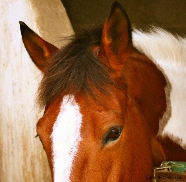 On a écrit à juste titre que le cheval comprend l'homme plus vite et mieux que ne comprend le cheval .