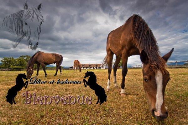 Bienvenue amis des chevaux.