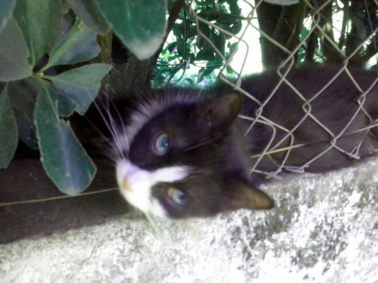Mon chat!