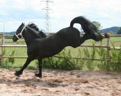 photo cheval ruade
