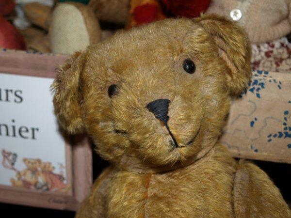 Portraits d'ours anciens