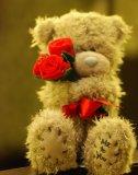 Photo de a-Teddy-Bear-Story