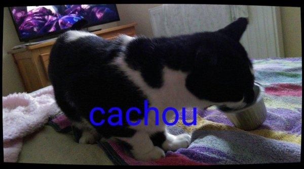 mes 2 chats  cachou et princesse