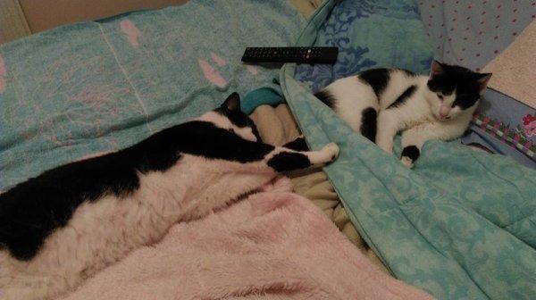 moi et mes bb d amour et mes chats