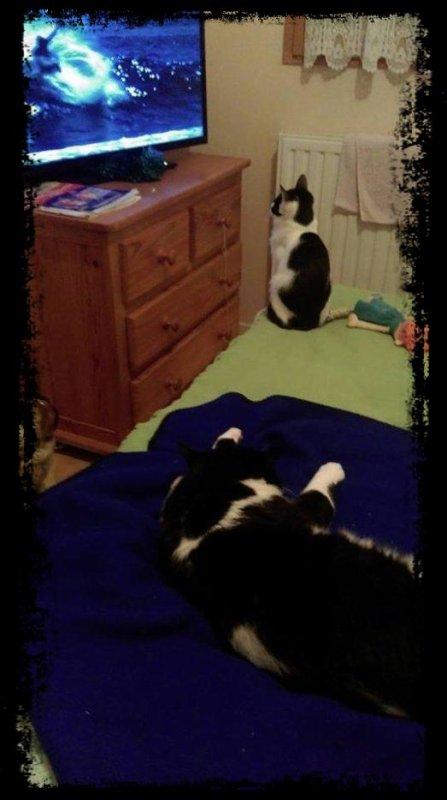 mes chats cachou et princesse