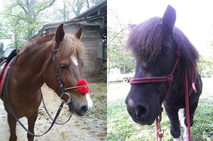 chevaux et poney