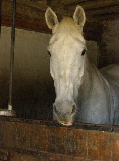Si un jour on m'avait diit que jallais autant aimé ce cheval je ni aurai pas cru & pourtant aujourd'hui je l'aime  ♥♥♥