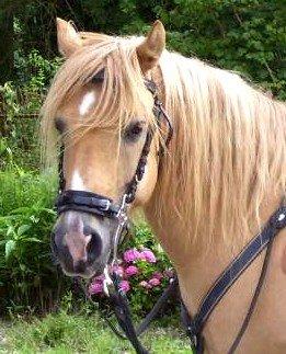 Je recherche un poney.