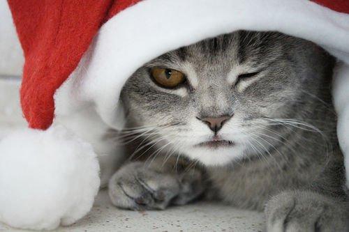 Christmas Time | Ce qui me rend heureuse à Noël