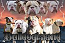 Photo de bulldogIsland