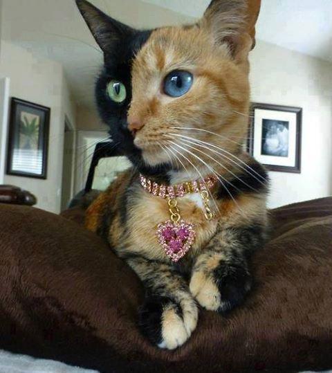 Un chat hors du commun !