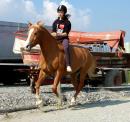 Photo de my-horse-my-friend