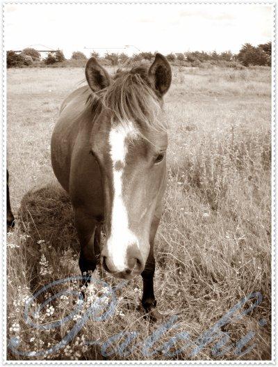 Un poney, une histoire