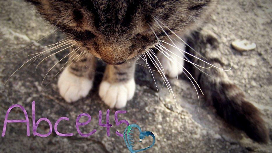 Au Bonheur des Chats des Enfants