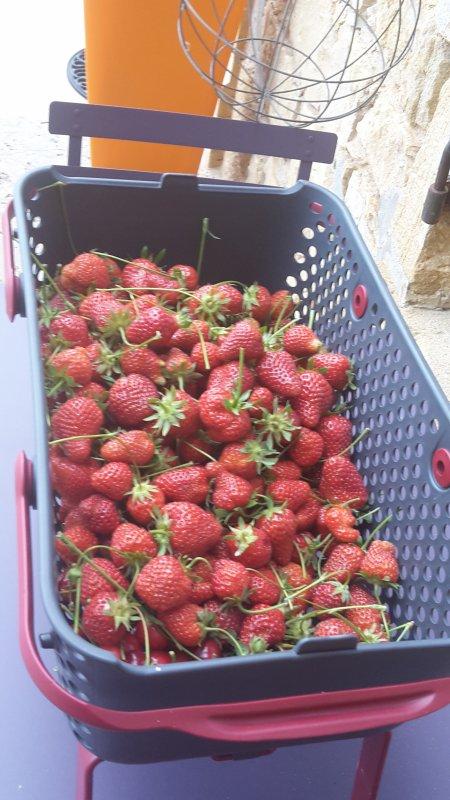 Puisque vous parlez fraises ...