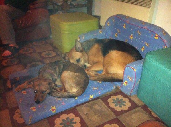 Des fois les refuges sont bien pour adopter un chien ou plusieurs des petits malheureux que l'on peut rendre heureux :)