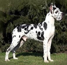 sa ses le chien que mon cheri veux un jour tu l'aura je taime mon amour pour la vie