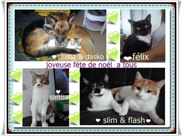 voivi   mes amours     Félix     flash    simba  slim  dasko ♥♥♥♥