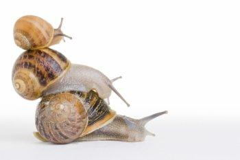 FICHE N°14 : L'Escargot