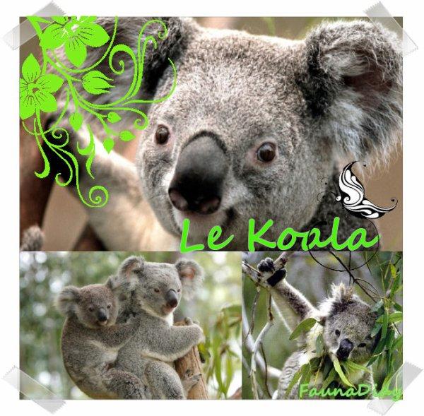 FICHE N° : Le Koala