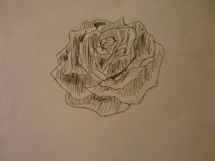 Un rose  (: