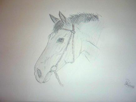 Portrait  d'un cheval avec Filet