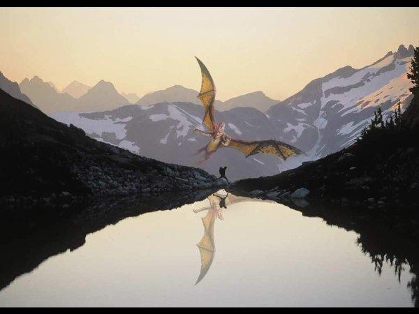 Dragons 11