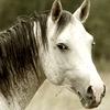 Gentle-Pony