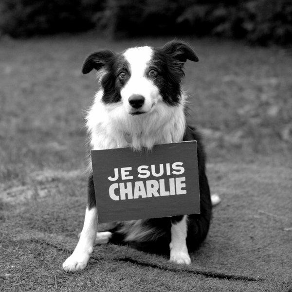 hommage fait par un chien