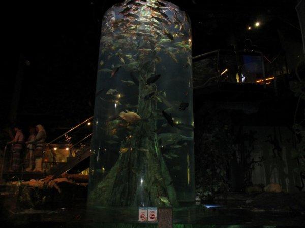 Aquaria power