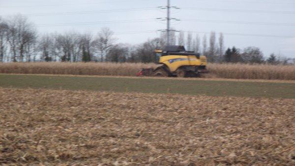 Maïs grain 2012 Suite et Fin