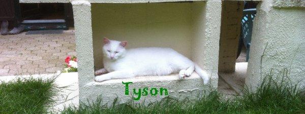 ..(l)(l)..... TYSON ..... (l)(l)(l)