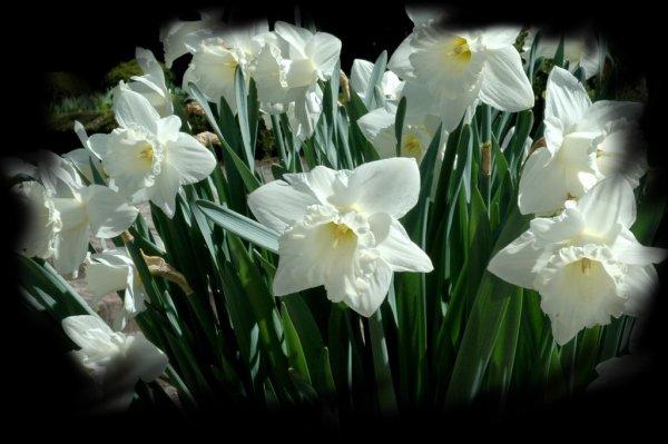 ★☼★..... LE TEMPS DU LILAS et des autres Fleurs.....★☼★