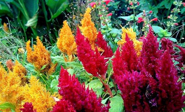 Fleurs bisare