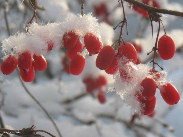 snow snow ♥